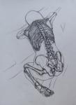 anatomski-crtez